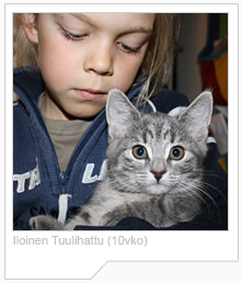 FIN*Iloinen Tuulihattu EUR a23 European short hair cat